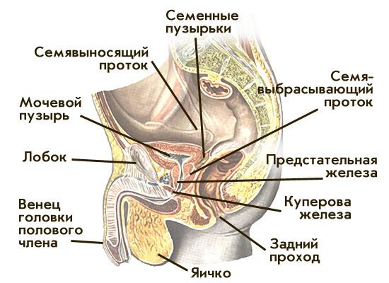 Сколько помещается спермы во влагалище у женщины фото 192-153