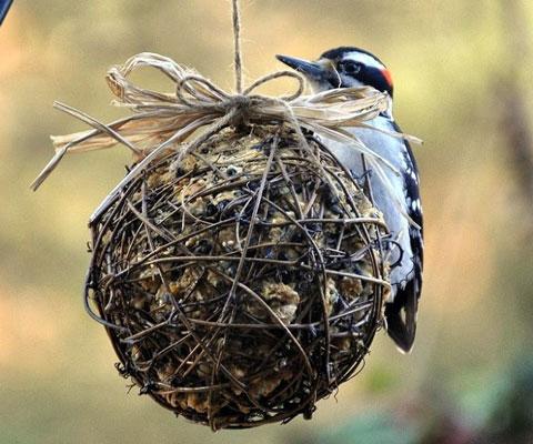Оригинальные кормушки для птиц своими руками: 7 идей кормушек, фото