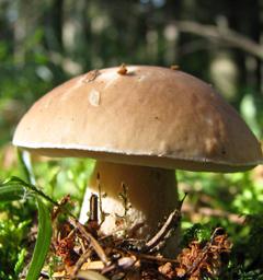 Блиц: грибы