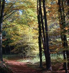 Блиц: леса