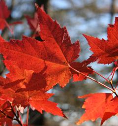 Блиц: осенние листья