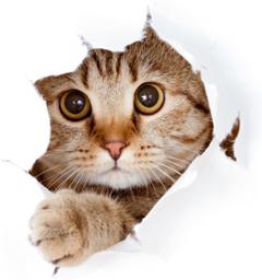 Блиц: с точки зрения кошки