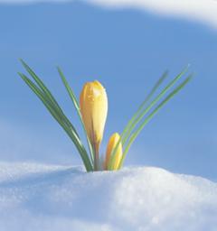 Блиц: весна