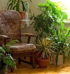 Блиц: домашние растения