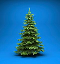 Блиц: елки-иголки