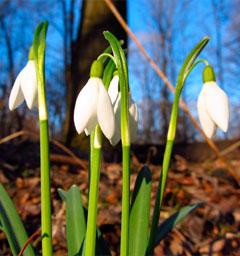 Блиц: весна идет!