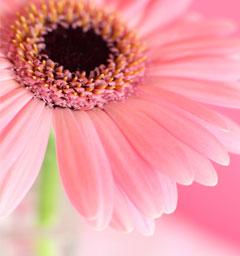 Блиц: розовое