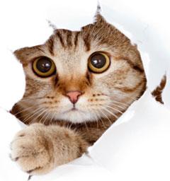 Лучше кошки зверя нет!
