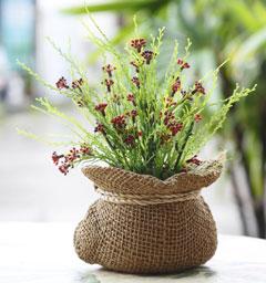 Блиц: комнатные растения