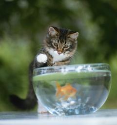 Блиц: вода