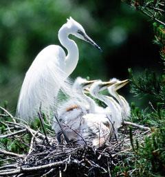 Фотоконкурс 'Блиц: птичья жизнь'