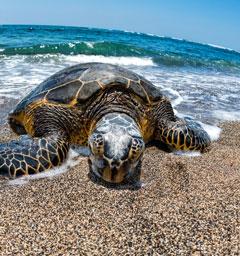 Фотоконкурс 'Блиц: море'