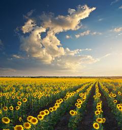 Фотоконкурс 'Блиц: летнее небо'