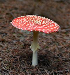 Фотоконкурс 'Блиц: грибы'