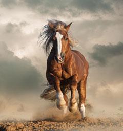Фотоконкурс 'Блиц: дикая фауна'