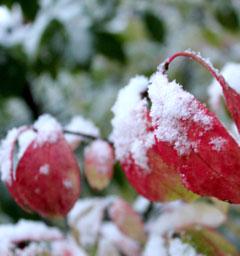 Фотоконкурс 'Первый снег'