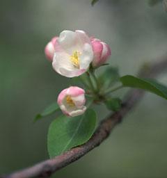 Блиц: цветение