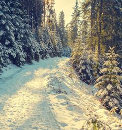 Блиц: снежная зима