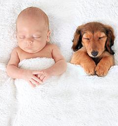 Спокойной ночи! Кто спит слаще всего?