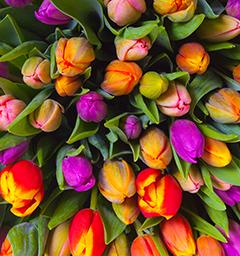 Блиц: весенние цветы!