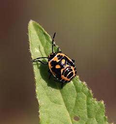 Блиц: насекомые