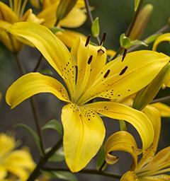 Блиц: желтые цветы