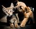Блиц: кошки против собак