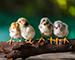 Блиц: птенцы