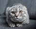 Блиц: семейство кошачьих