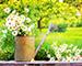 Блиц: летние цветы