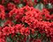 Блиц: красные цветы
