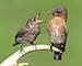 Блиц: птички