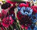 Блиц: полевые цветы
