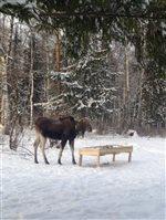 В сказочном Костромском лесу