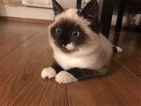 котенок по имени Софа :)