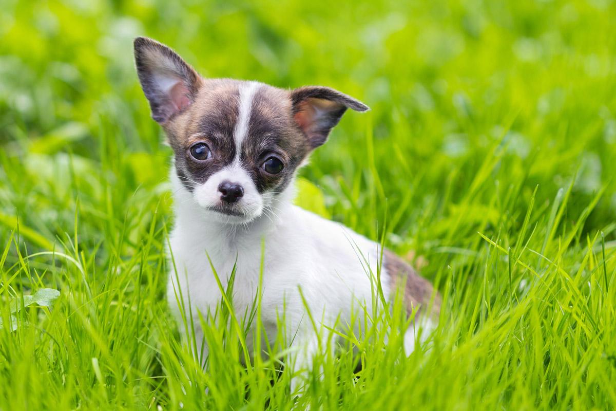 Как приучить ребенка ухаживать за собакой