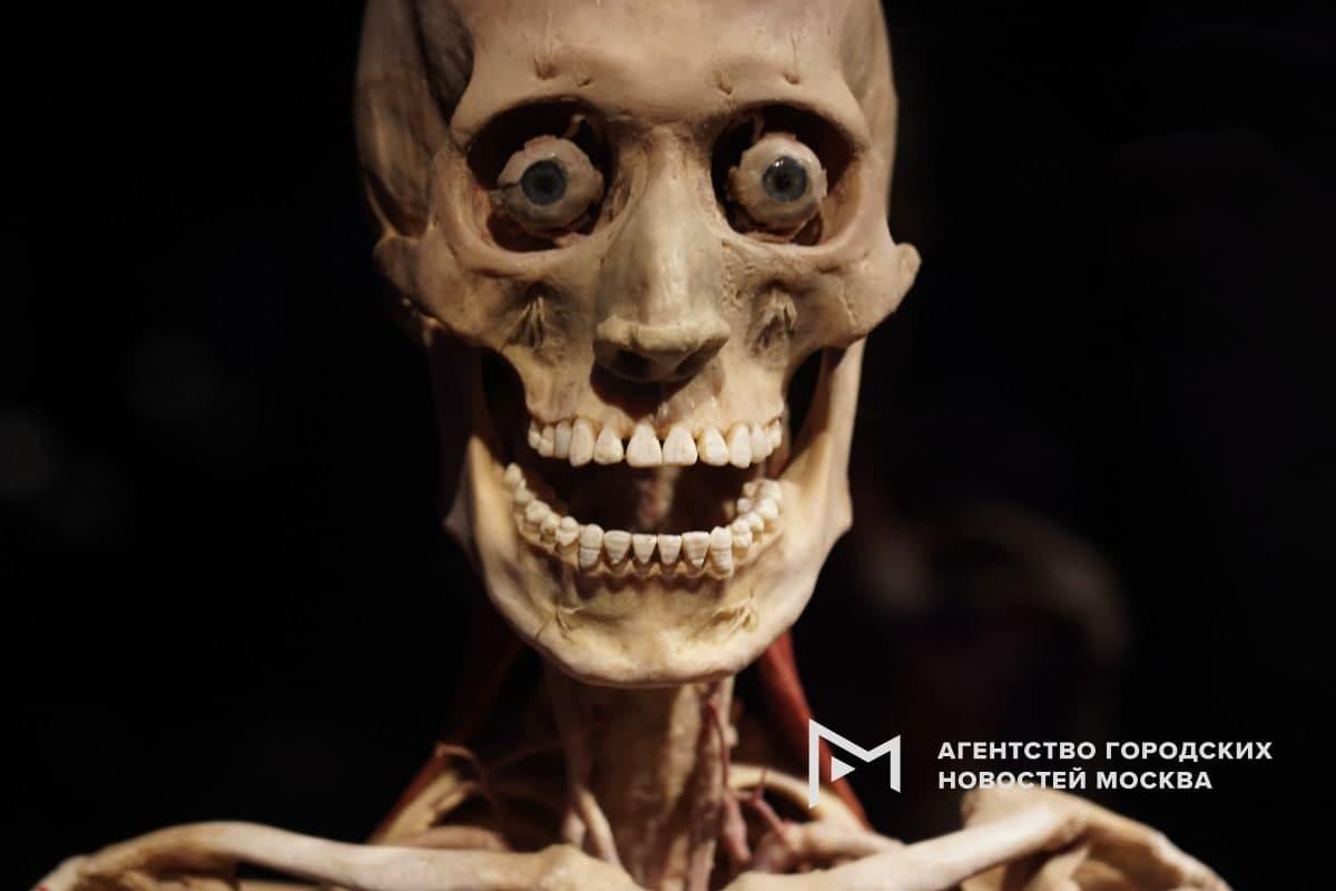 Анатомическая выставка Мир тела