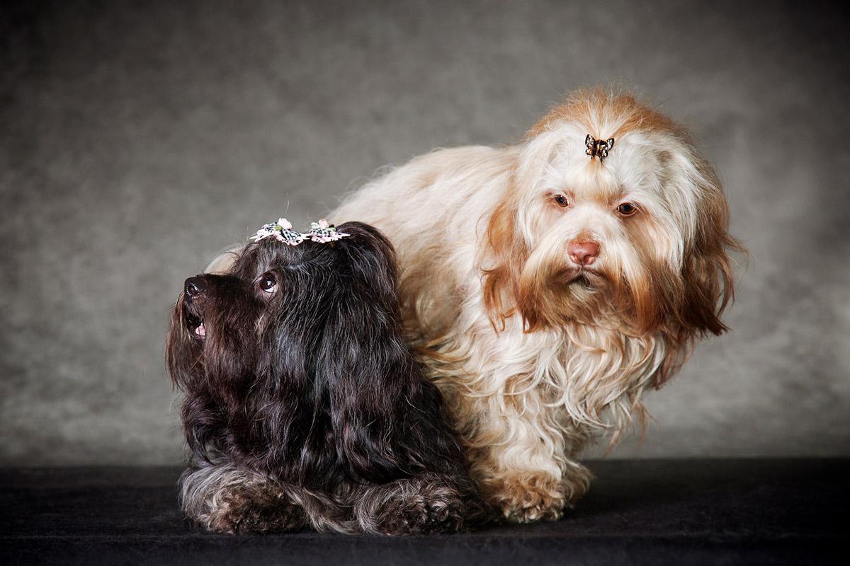 Обязанности владельца собаки