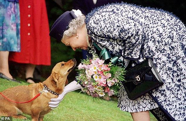 Королеве подарили двух новых корги - пока муж в больнице, а принц Гарри обвиняет семью