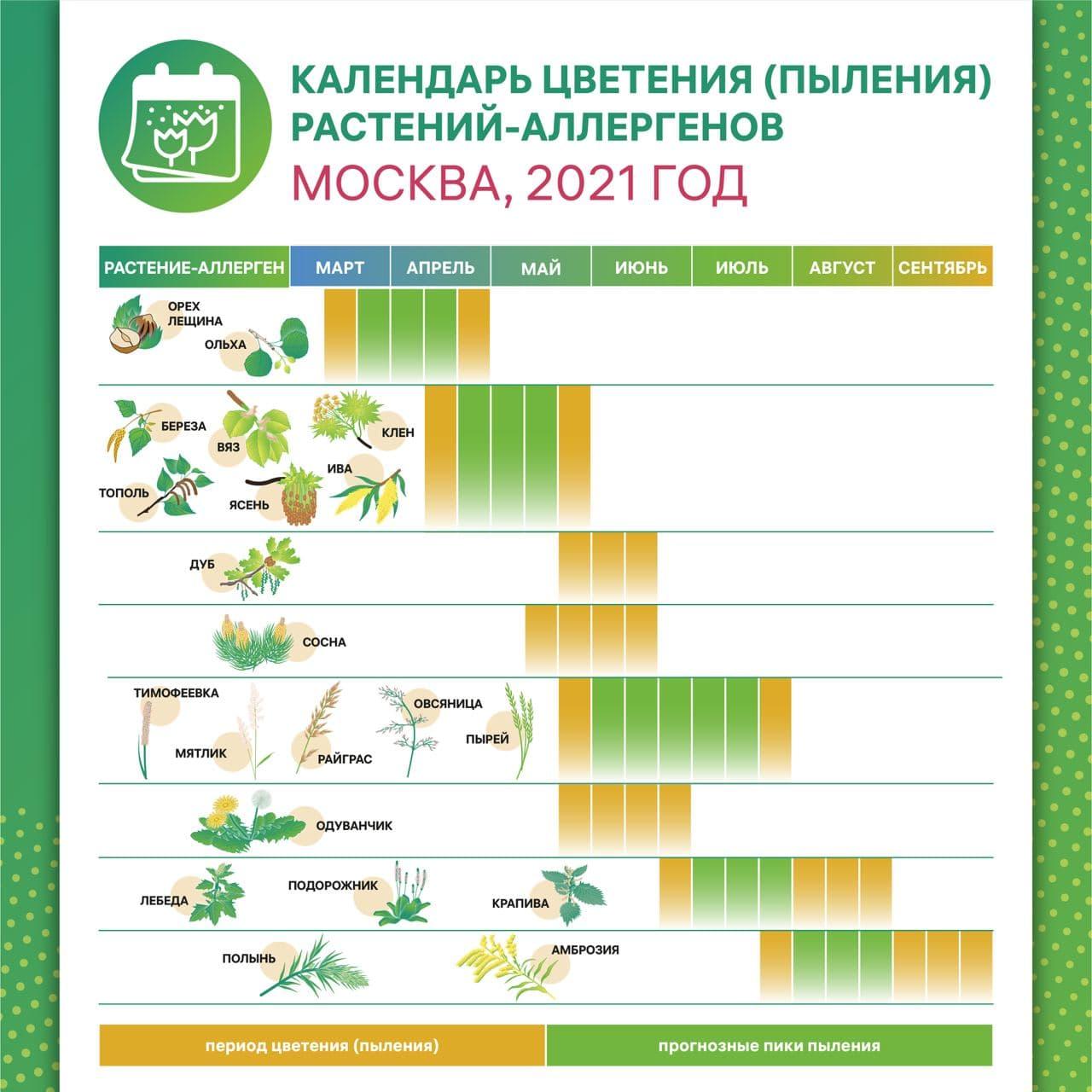 Календарь цветения растений-аллергенов