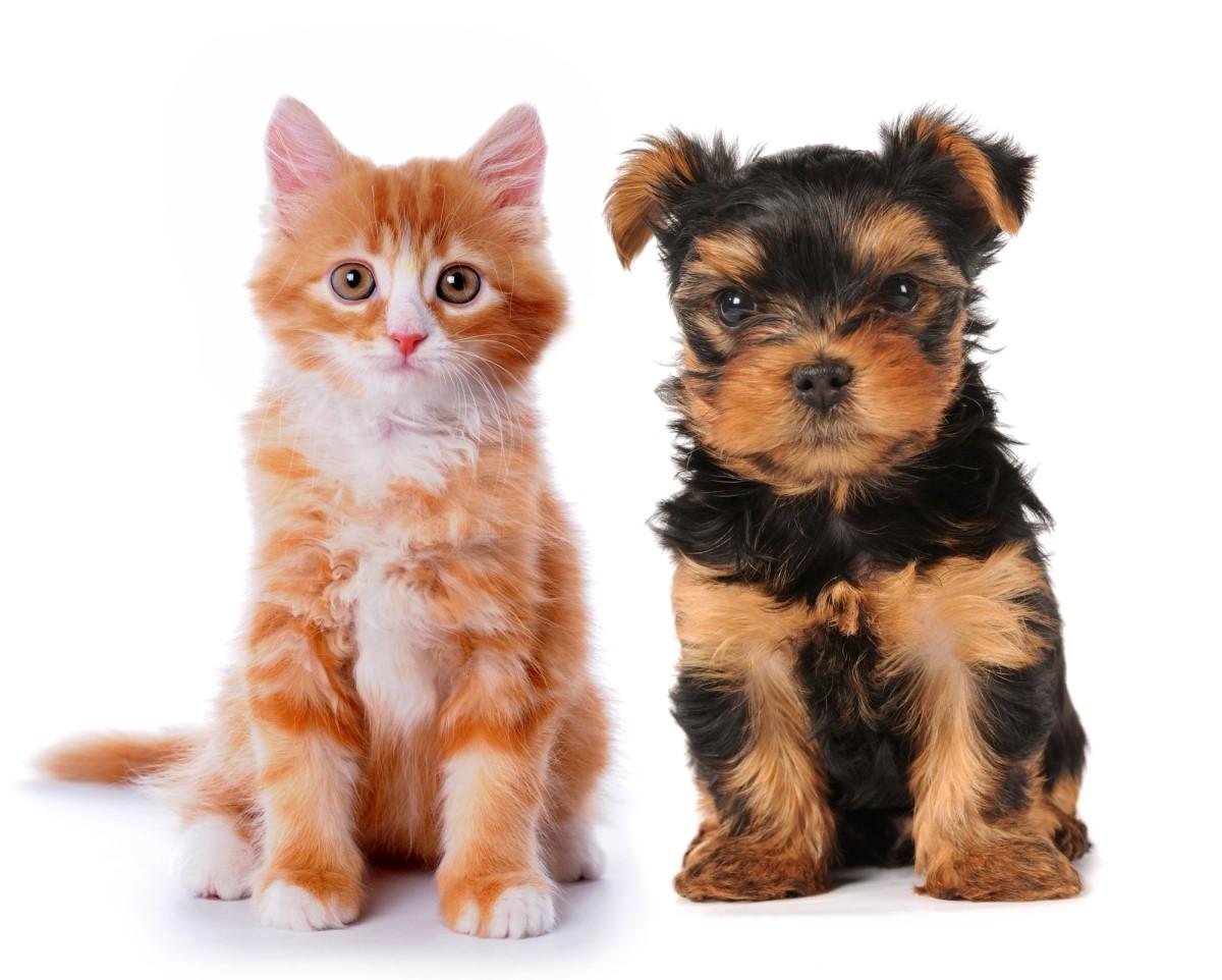 Чем кормить кошку и собаку