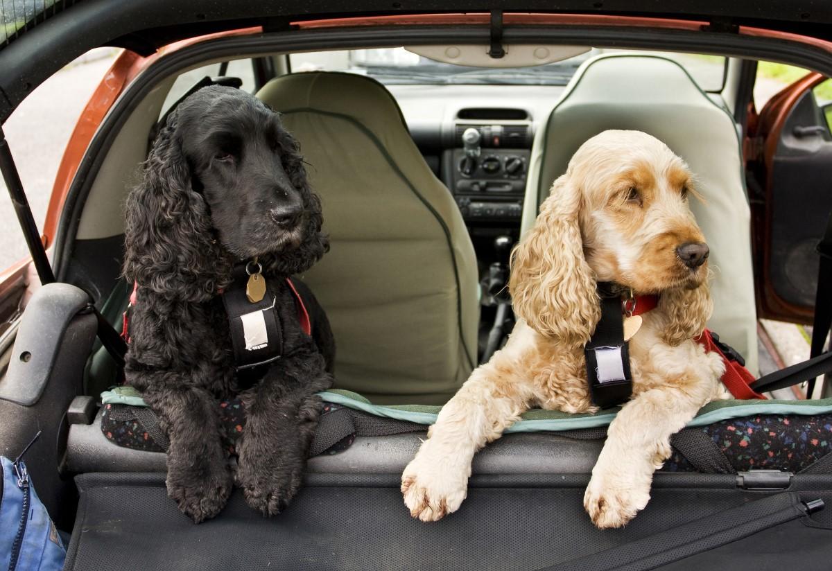Что взять с собой для поездки на дачу с собакой