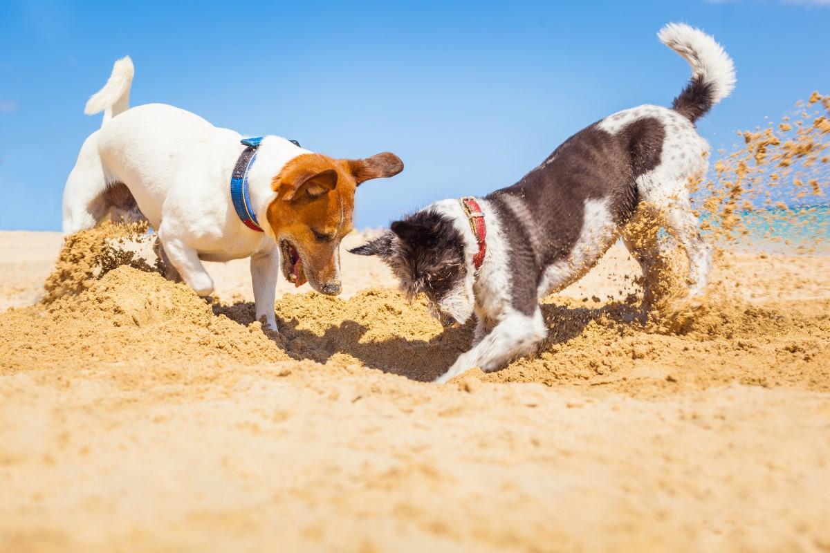 Правила нахождения с собакой на пляжах