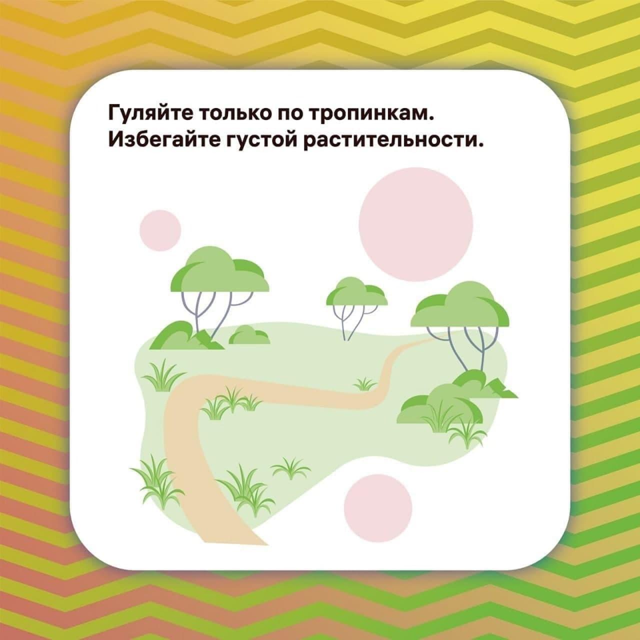 Клещи обитают в высокой траве