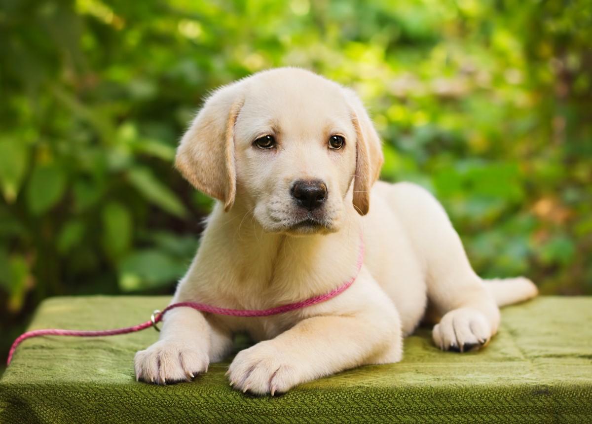 Как защитить собаку в жару