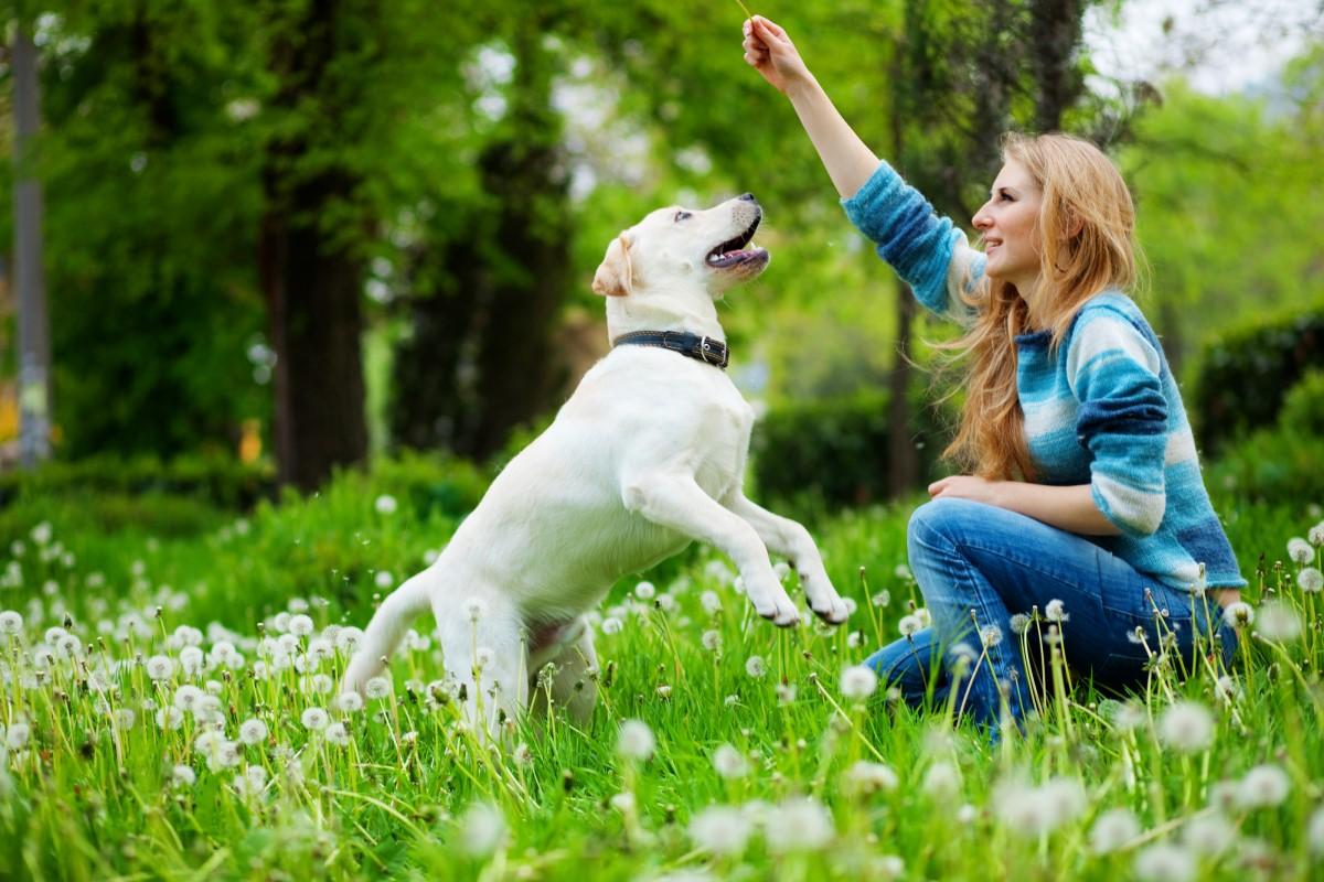 Самые популярные клички собак