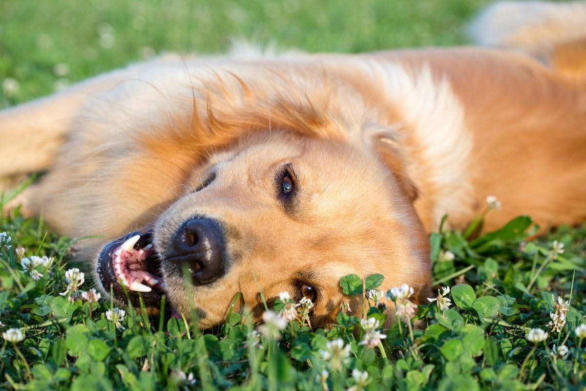 Какие профессии может освоить собака