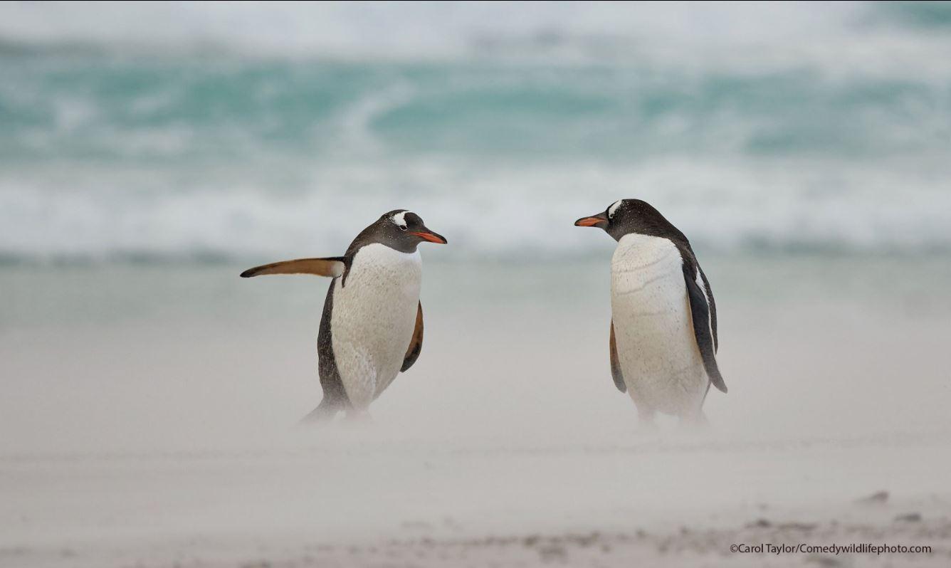 Самые комичные фото дикой природы