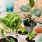 Комнатные растения - очистители воздуха жилищ