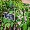 Как посадить помидоры, чтобы не болели фитофторой